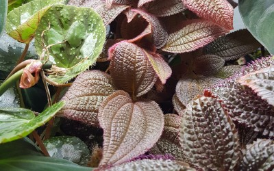 Common Terrarium Mistakes: From Wilted Plants to Bleach Dips